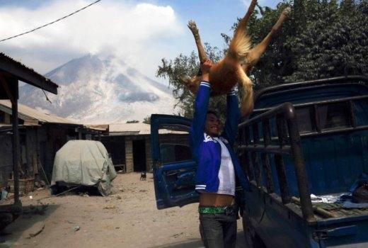 Một thanh niên nâng chú chó lên xe tải đi sơ tán khi núi lửa phun tro bụi xuống làng Pintu Besi, huyện Karo, tỉnh Bắc Sumatra, Indonesia hôm 5-2-2014 - Ảnh: BEAWIHARTA-REUTERS