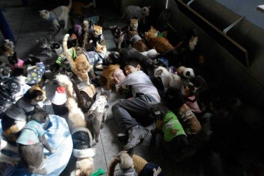 Khoảnh khắc yêu thương loài vật - bà Maria Torero và con trai (ảnh) đã biến ngôi nhà mình thành một mái ấm mới khi sống cùng và chăm sóc 175 con mèo bị mắc chứng bệnh bạch cầu tại thủ đô Lima, Peru hôm 15-8-2014 - Ảnh: MARTIN MEJIA-AP