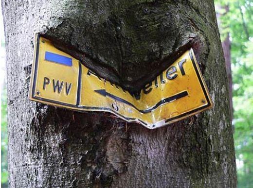 Bài học cho việc sử dụng thân cây để treo những tấm biển không đúng quy định