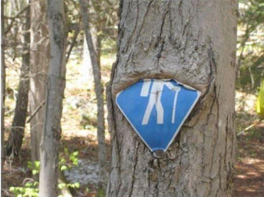 Loạt ảnh cây ăn đồ vật đáng sợ sẽ khiến bạn phải kinh ngạc