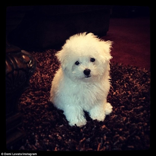 Demi Lovato tạo Twitter cho... cún cưng