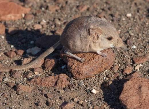 Những loài sinh vật độc đáo mới được phát hiện năm 2014