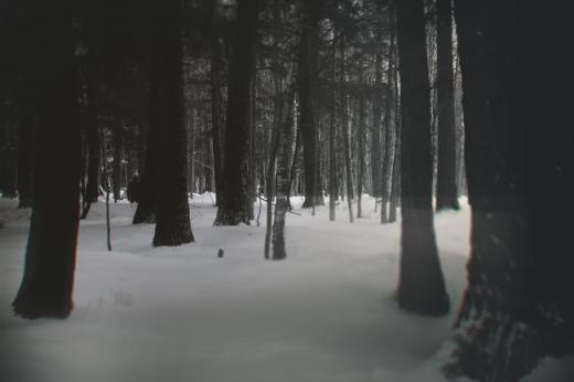 Bức hình chụp lại hình ảnh một người đàn ông bí ẩn trong khu rừng, bạn nhìn thấy chứ?
