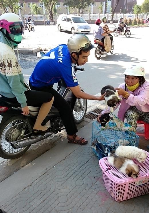 Nhiều teen vô tư mua chó dọc đường mà không hề biết đến sự thật bi kịch