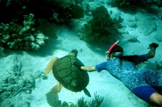 Lặn ngắm những rặng san hô mềm mại, những chú cá nhiều màu sắc.