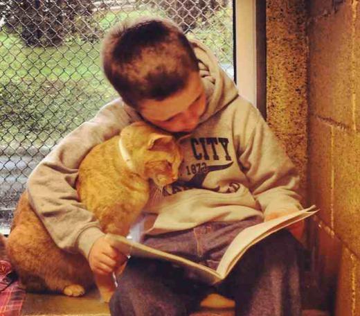 Một khu nhà cho động vật ở Pennsylvania đưa ra ý tưởng tuyệt vời kết đôi trẻ em và mèo thành những nhóm đọc sách. Hàng tuần, hơn 20 em bé từ lớp 1 đến lớp 8 đã thăm Hiệp hội cứu trợ động vật ở hạt Berks, nơi chúng đọc sách cho những chú mèo vô gia cư.