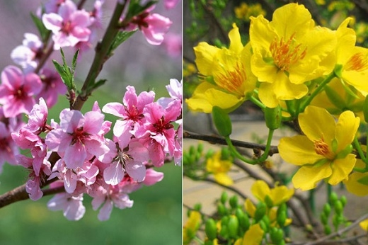 Những cành hoa, cành đào đang khoe sắc trong nắng Xuân