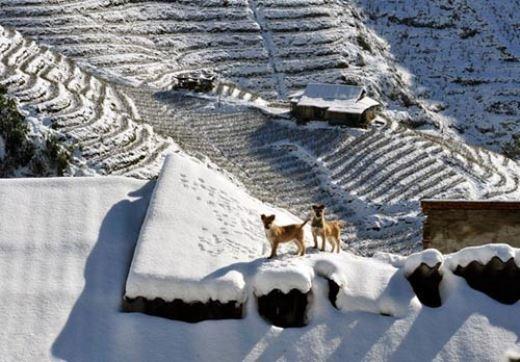 Tuyết rợp trắng xóa trên những cung ruộng bậc thang tại Sa Pa