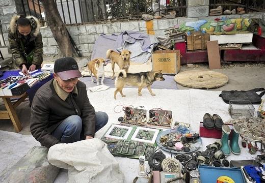 Cảm động đôi vợ chồng già cưu mang chó mèo hoang suốt hơn 10 năm