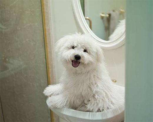 Cún cưng của Mark Zuckerberg cũng có trang cá nhân