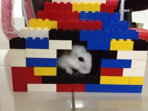 Nhà cho chuột bạch