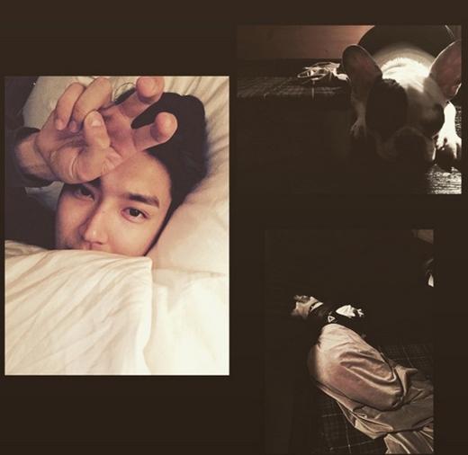 Siwon không quên chúc các fan ngủ ngon bằng hình ảnh tự sướng của anh và chú cún đáng yêu: Ngủ ngon cả thế giới.
