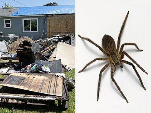Căn nhà bị phá nát chỉ để giết một con nhện.