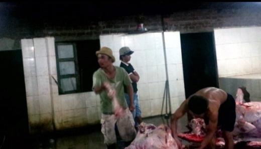 Khi bò ngấm nước, họ tiến hành giết mổ
