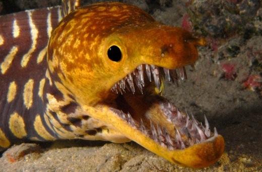 Những sinh vật biển có diện mạo khiến con người chết khiếp