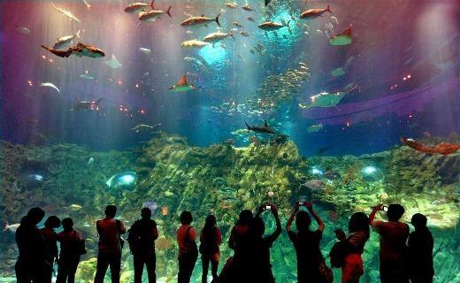 Thủy cung ở công viên Hải Dương được xem là một trong những thủy cung hoành tráng và nhiều loài cá nhất thế giới