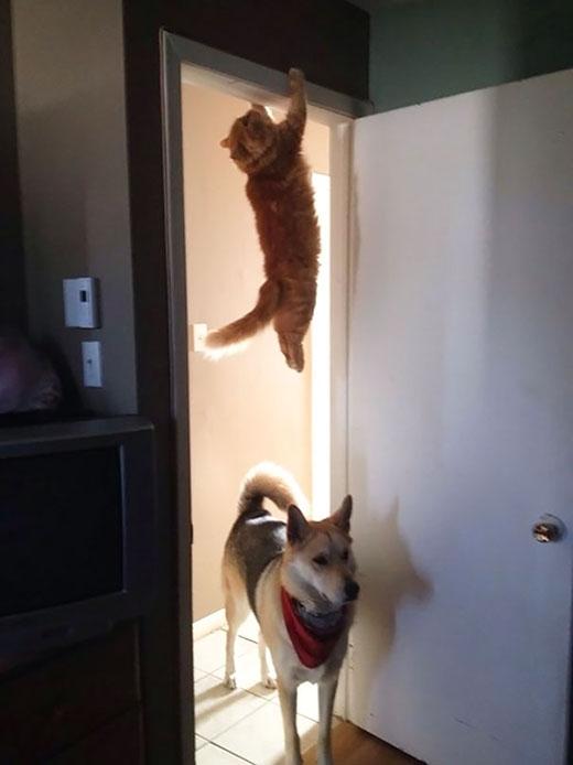 Hi vọng là tên chó sẽ không ngước nhìn lên phía trên...