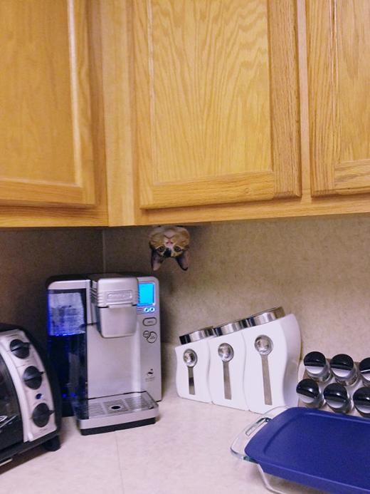 Chỉ cần núp ở đây chắc chắn sẽ phát hiện được cô chủ giấu đồ ăn ở đâu