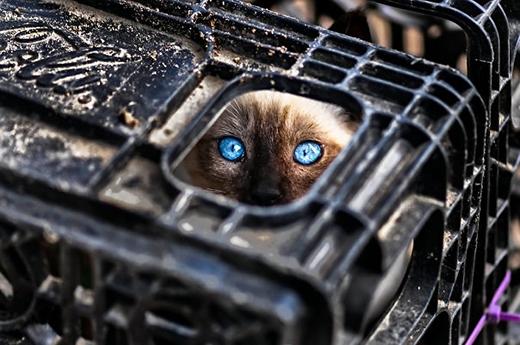 Chết cười với những màn lẩn trốn siêu như ninja... mèo