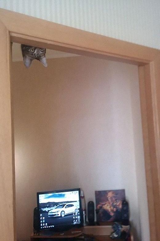 Hãy chắc rằng bạn không bị hoảng hồn khi chú mèo bất ngờ treo lơ lửng thế này trong nhà...