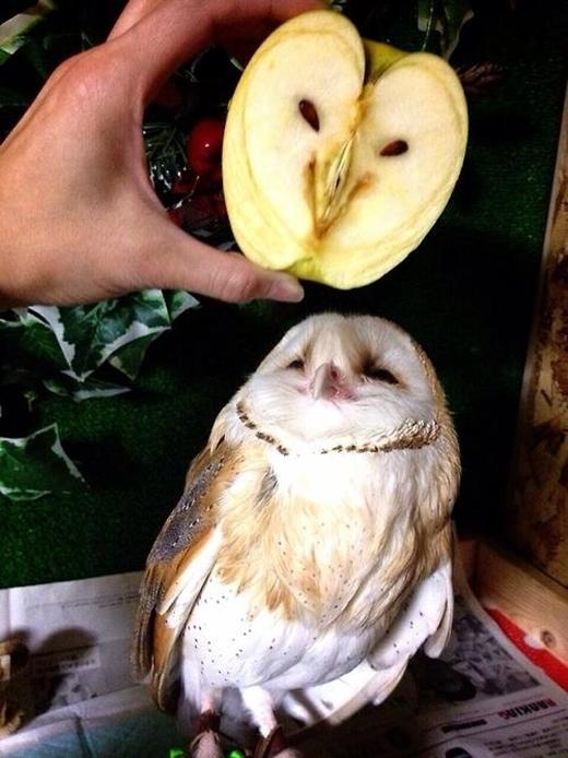 Quả táo này nhìn như là một chú cú mèo