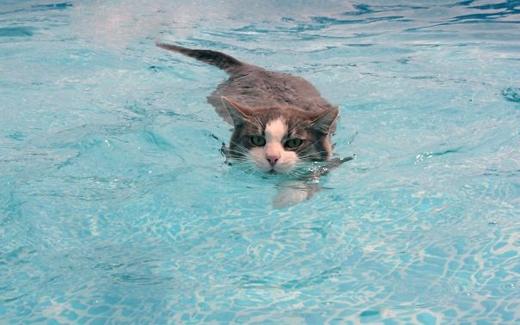 Luyện tập để đi thi bơi đường dài.