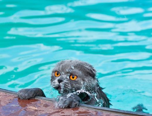 Bơi là chuyện nhỏ?