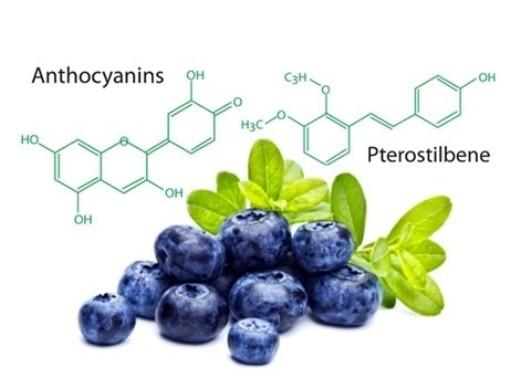 Hoạt chất sinh học thiên nhiên từ Blueberry giúp chống gốc tự do, phòng ngừa đột quỵ.