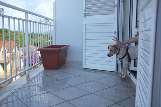 Xúc động với câu chuyện của chú chó nhỏ được nhận nuôi