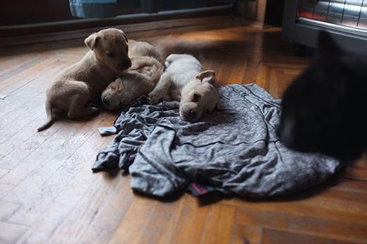 Cô chủ của Vackor nhận nuôi 3 đứa trong bầy chó con đó. Nhưng rút cuộc, cô chỉ giữ lại mỗi Vackor để nuôi.