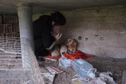 Đây là nơi ở của Vackor vào ngày mà người chủ tốt bụng này tìm thấy nó. Có thể nhận thấy chỗ này vô cùng ẩm thấp, dơ bẩn và các chú chó đang rất đói.