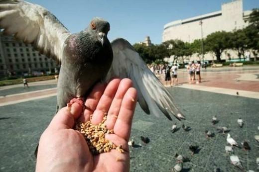 Không được cho bồ câu ăn: Ở San Francisco có luật cấm cho bồ câu ăn ngoài đường phố, vì vậy nếu đến đây du lịch thì bạn đừng quên luật này để khỏi phạm pháp nhé!