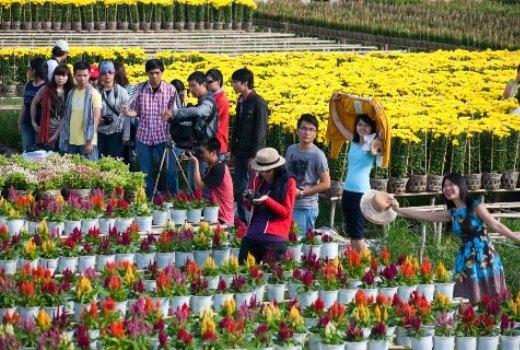 5 vườn hoa Tết miền Tây làm say mê du khách