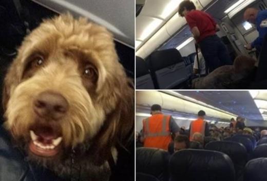 Choáng với những sự cố hy hữu buộc máy bay phải hạ cánh khẩn cấp