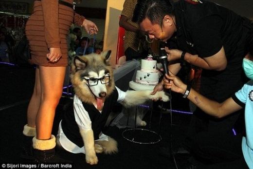 Đám cưới siêu lãng mạn của... hai chú chó
