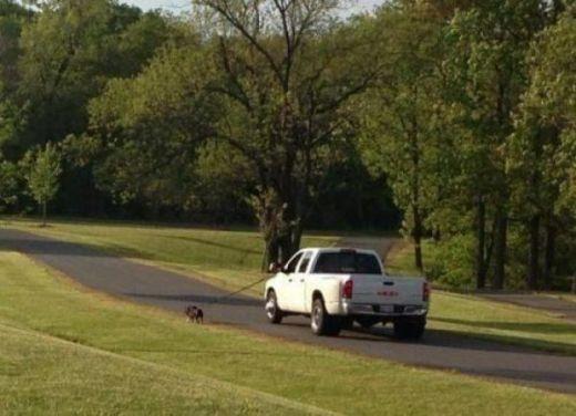 Dắt chó đi dạo phong cách bá đạo