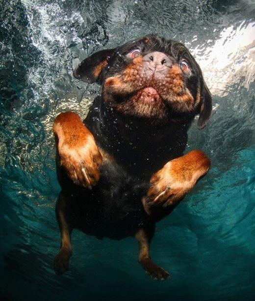 Chúng tôi không sợ khi xuống nước. Chúng tôi chỉ bị lé mắt mà thôi.