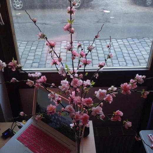 Ngọc Minh - sinh viên đang học tập tại Phần Lan thì lại chọn cách mua hoa đào để trang trí nhà mỗi dịp Tết đến. Minh cho hay, tối nay cô sẽ đến nhà bạn của mình để dự tiệc tất niên cùng những người Việt khác. (Ảnh: Ngọc Minh)