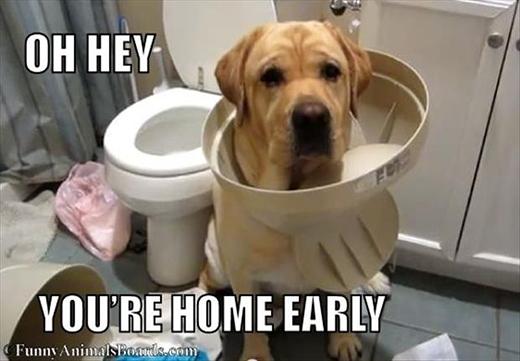 Ối... Sao cô chủ về nhà sớm thế?