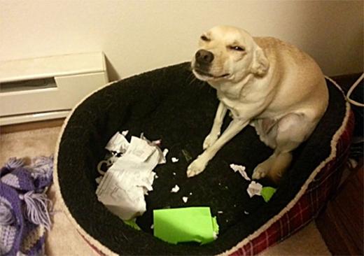 Chết cười với hành động đáng ghét của những chú chó