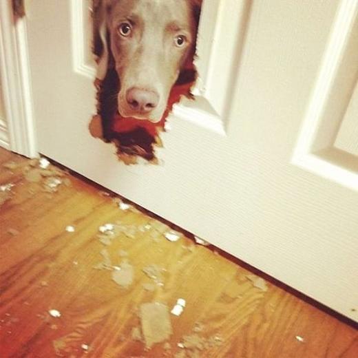 Hội những con chó luôn vờ như chưa từng có gì xảy ra.