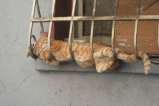 Đây là Hội những chú mèo thích khổ không thích sướng.