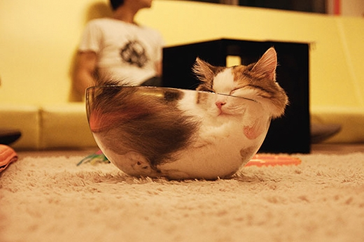 Người ta nói mèo là chất lỏng quả không sai