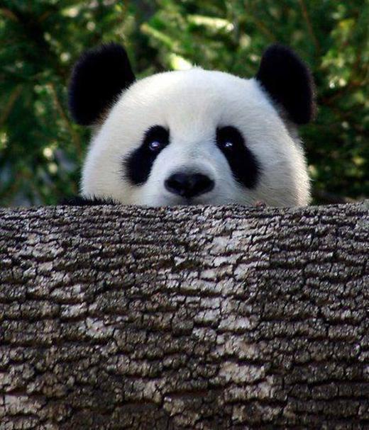 Đôi mắt thật ăn nhập với mẩu gỗ.