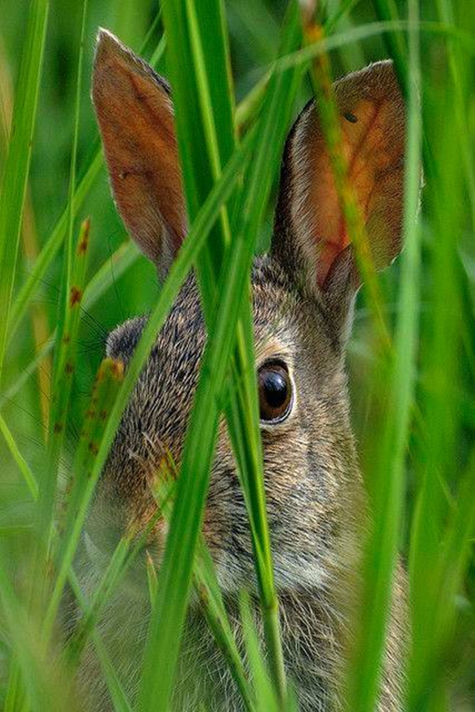 Một chú thỏ đang giương tròn mắt.