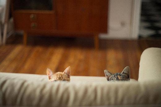 Hội những con mèo khoái chơi trốn tìm.