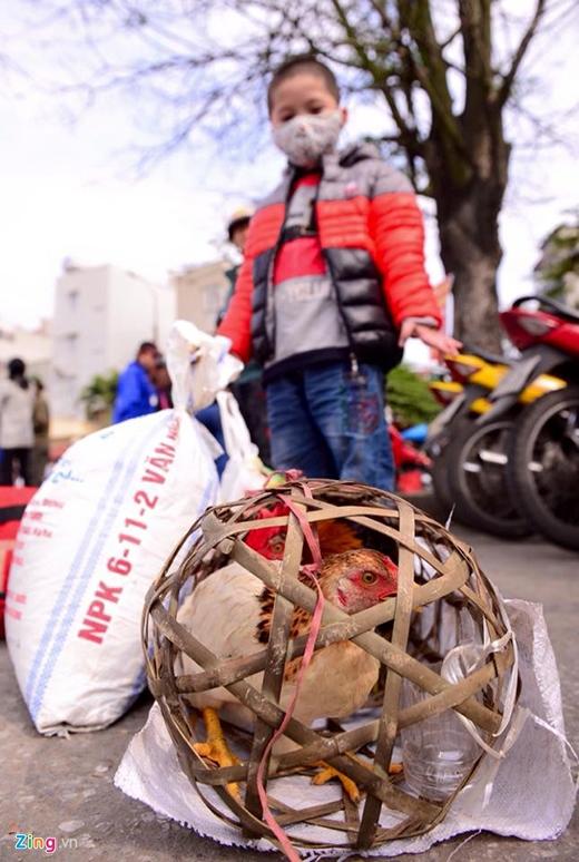 Từ quê ngoại Phủ Lý (Hà Nam) về Hà Nội sau kỳ nghỉ Tết, Trần Vũ Thành Nam (6 tuổi) được ông bà ngoại cho 2 con gà làm quà. Ảnh: Anh Tuấn.