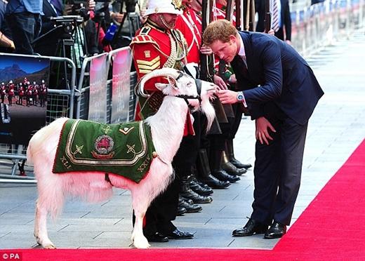 Hoàng tử Harry chào chú dê Shenkin thuộc quân đội hoàng gia xứ Wales trong một sự kiện tháng 6/2014. Ảnh: Daily Mail