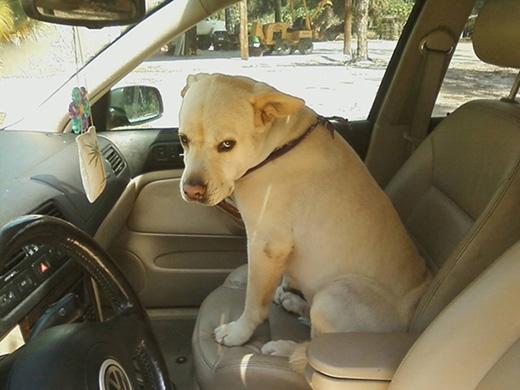 Cậu chủ đang nói đùa đúng không?   Tôi nhảy xuống xe ngay bây giờ đấy!!!