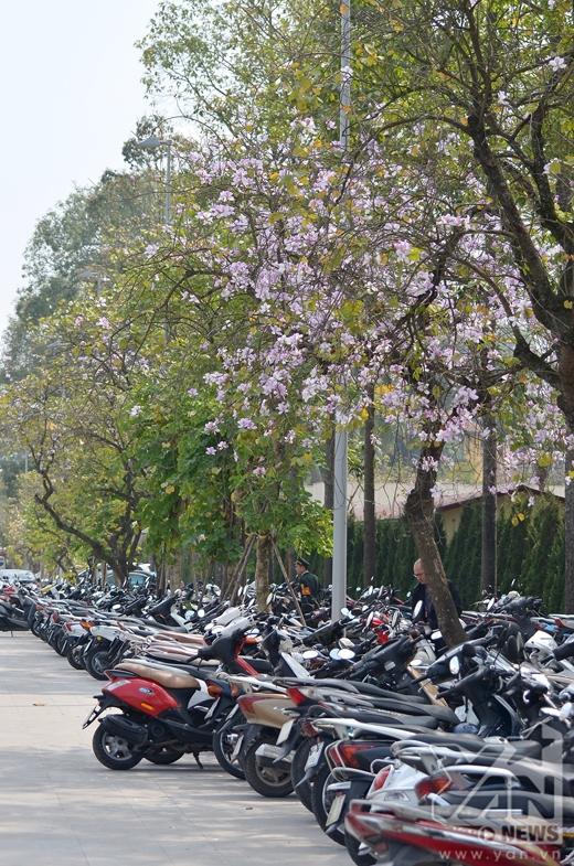 Tuy nhiên năm nay, đường Bắc Sơn đã bị cấm vào để phục vụ cho tòa nhà Quốc Hội mới.